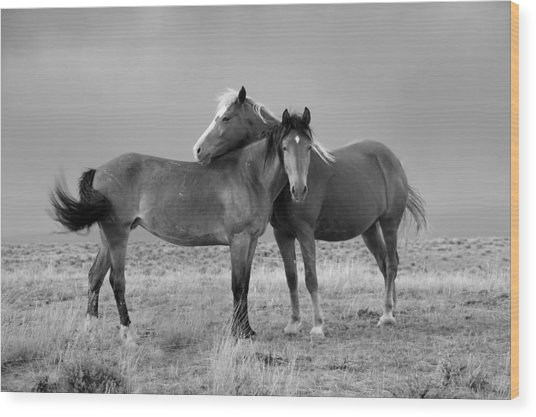 Lean On Me B And W Wild Mustang Wood Print