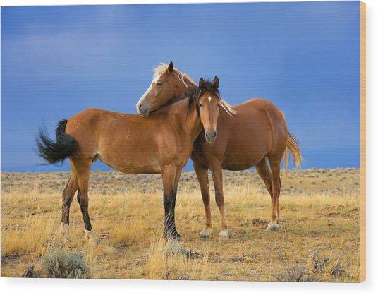Lean On Me Wild Mustang Wood Print