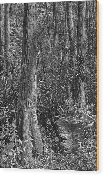 Leather Fern. Shingle Creek Basin. Wood Print