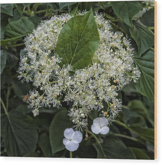 Leaves And Flowers Wood Print by Robert Ullmann