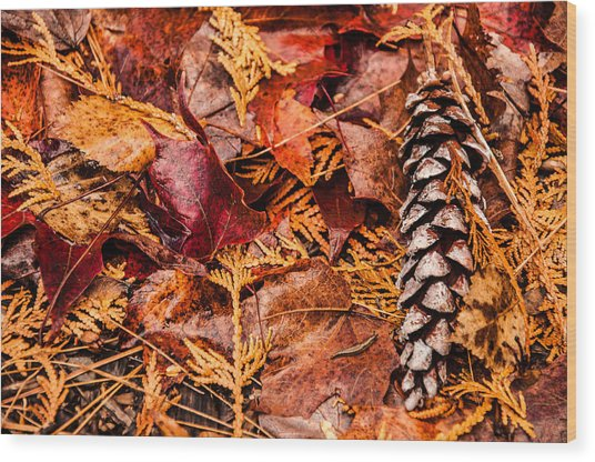 Wood Print featuring the photograph Leaves And Pine Cones by Rosemary Legge