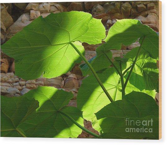 Leaves In Shadow Wood Print