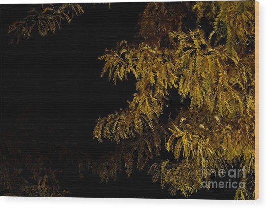 Leaves In The Night I Wood Print by Phil Dionne