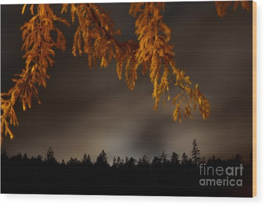 Leaves In The Night II Wood Print by Phil Dionne
