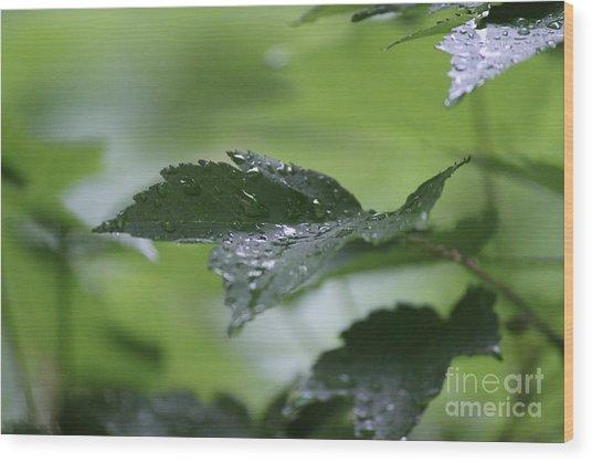 Leaves In The Rain Wood Print