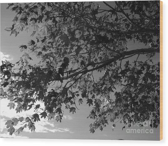 Wood Print featuring the photograph Leaves On A Tree by Laura  Wong-Rose
