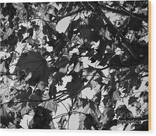 Wood Print featuring the photograph Leaves On A Tree Ll by Laura  Wong-Rose