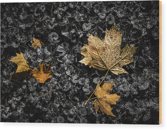 Leaves On Forest Floor Wood Print
