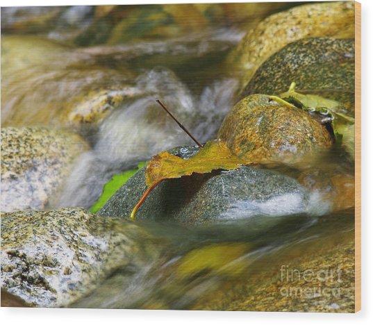 Leaves On The Rocks Wood Print