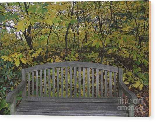 Leaving In The Fall Wood Print by Geri Glavis