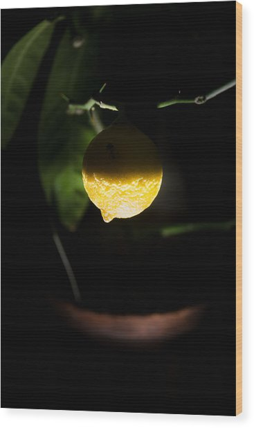 Lemon's Planet Wood Print