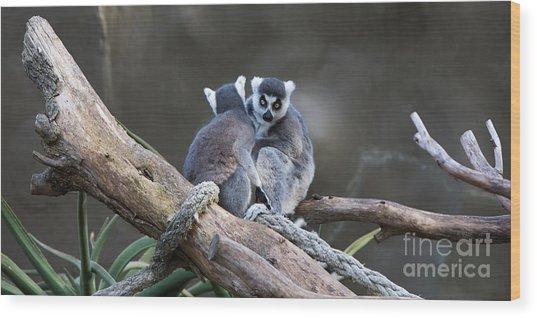 Lemur's Wood Print by Shannon Rogers