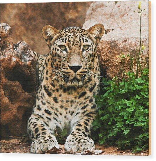 Leopard Wood Print by Amr Miqdadi