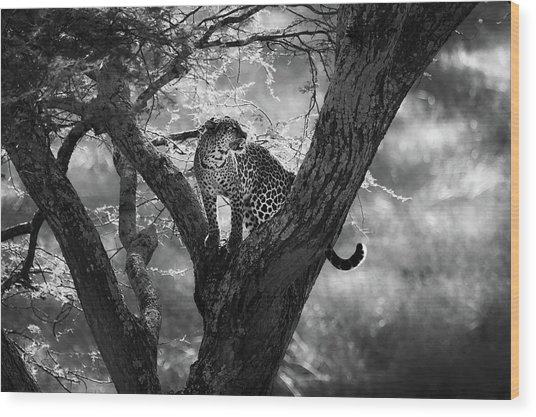 Leopard Wood Print by Bjorn Persson