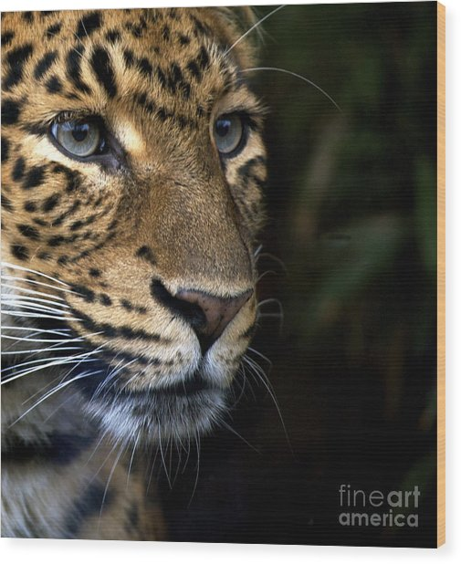 Leopard Cub Wood Print