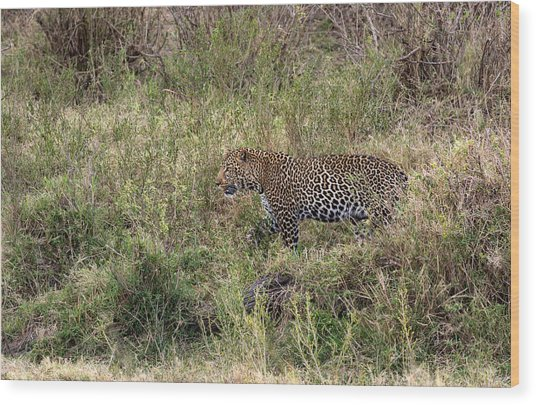 Leopard In The Grass Wood Print