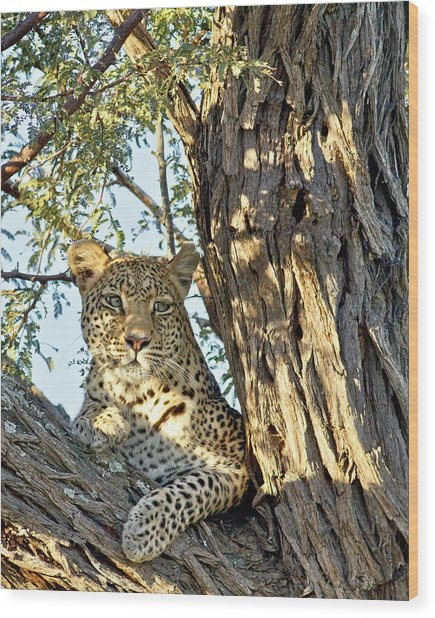 Wood Print featuring the photograph Leopard Portrait IIi by Gigi Ebert