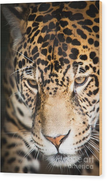 Wood Print featuring the photograph Leopard Resting by John Wadleigh