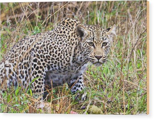 Leopard Stare Wood Print