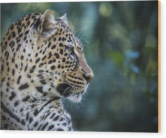 Leopard's Look Wood Print