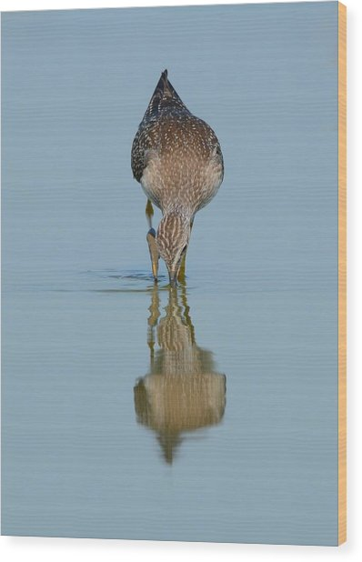 Lesser Yellowlegs Wood Print