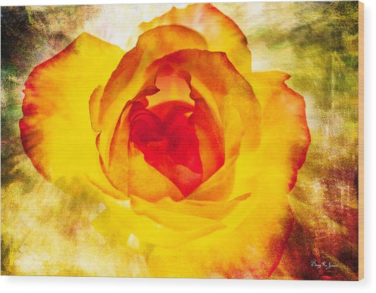 Floral - Rose - Let It Shine Wood Print by Barry Jones