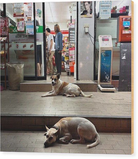 Wood Print featuring the photograph Let Sleeping Dogs Lie Where They May by Mr Photojimsf