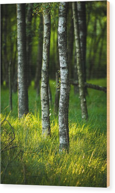 Life Is A Birch Wood Print