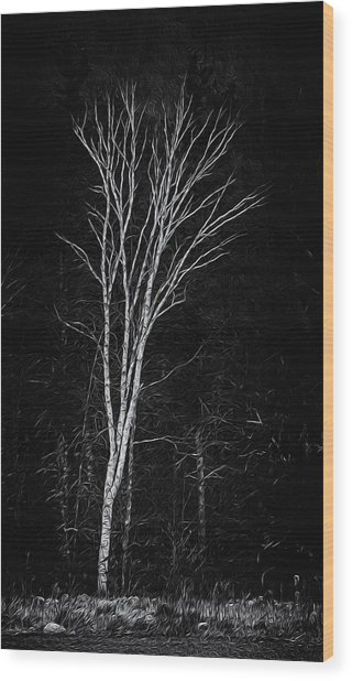 Life's A Birch No.2 Wood Print