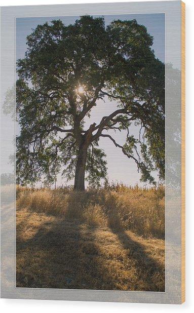 Light And Life Wood Print