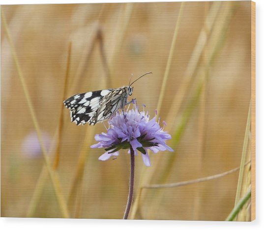 Light Butterfly Wood Print