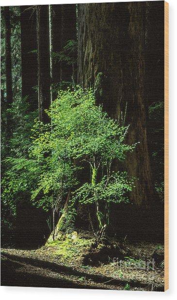 Light In Darkness Wood Print by Kim Lessel