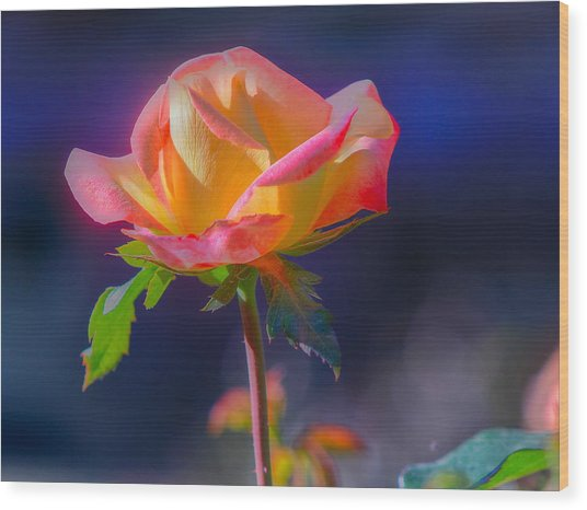 Flower 10 Wood Print