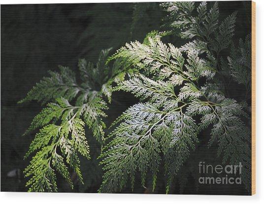 Light On The Fern Wood Print