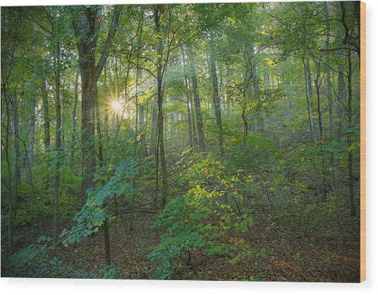 Light Up The Forest Wood Print