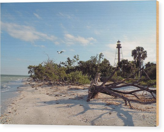 Lighthouse Beach Wood Print by Rosalie Scanlon