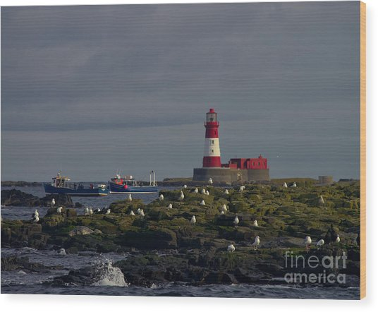 Lighthouse On The Farne Isands Northumberland Wood Print