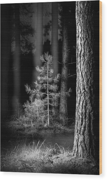 Lightpainting The Pine Forest New Growth Wood Print