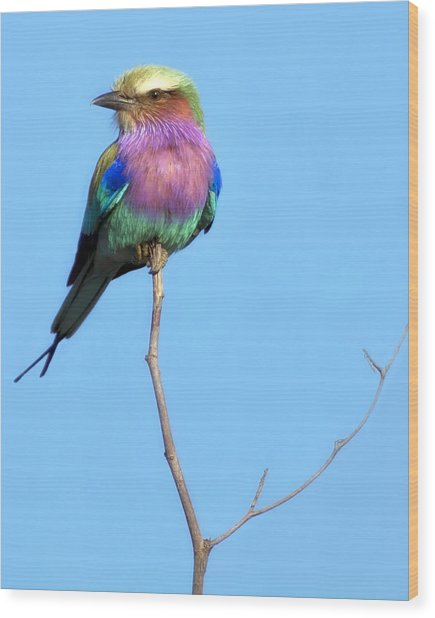 Wood Print featuring the photograph Lilac-breasted Roller I by Gigi Ebert