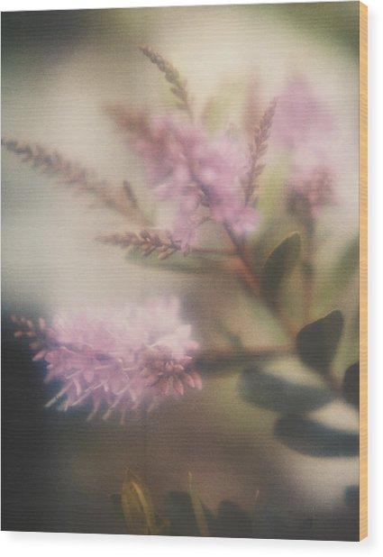 95006 Lilac Wood Print