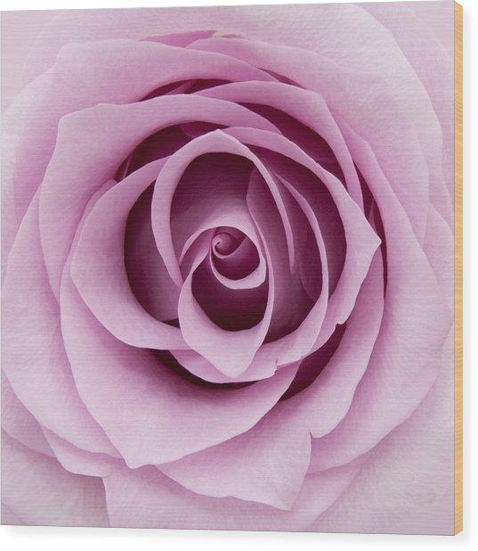 Lilac Rose Wood Print