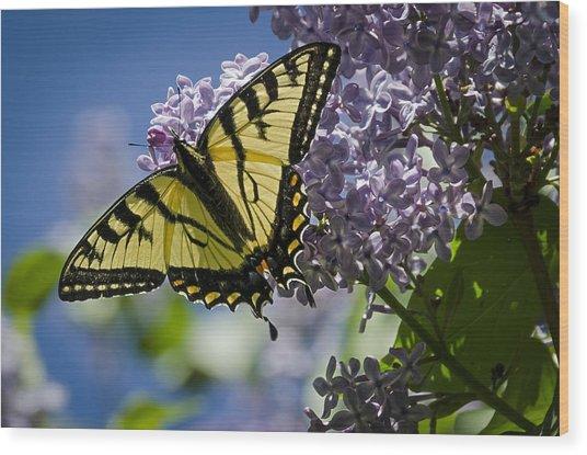 Lilac Tiger Wood Print