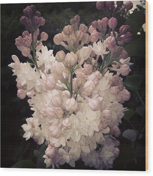 Lilacs Are Blooming Wood Print