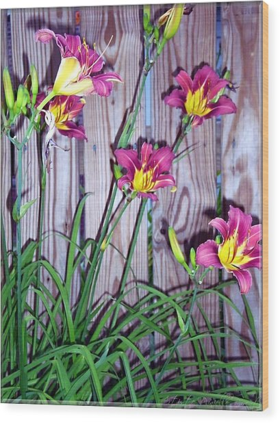 Lilies Against The Wooden Fence Wood Print