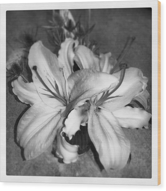 Lilies Wood Print by Heather L Wright