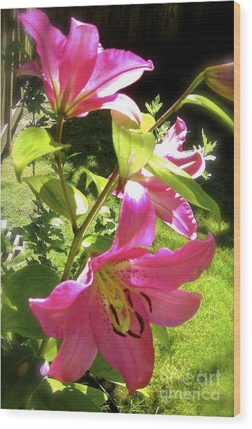 Lilies In The Garden Wood Print