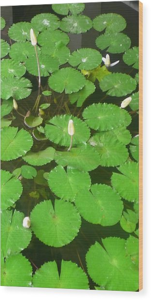 Lilies In The Pond Wood Print by Jack Edson Adams