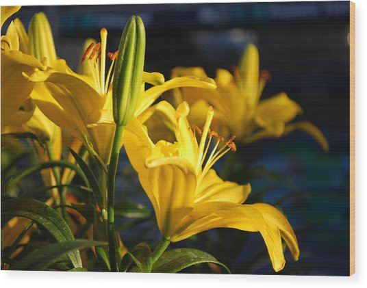 Lillies Of Gold Wood Print by Billie Colson