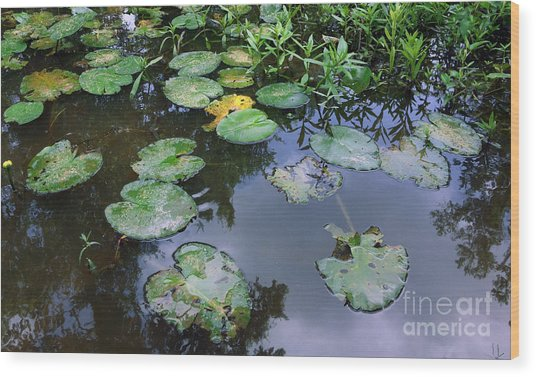 Lilly Pad Reflections Wood Print
