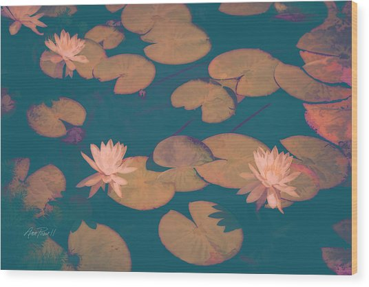 Lilly Pads In Pink  Wood Print